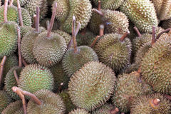 Durian king of fruit Stock Images
