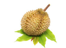 Durian ,king of fruits Stock Photos