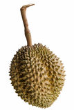 Durian the king of fruits. Stock Photo