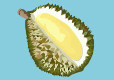 Durian. The king of fruits.  , The Mother of all fruits in the entire world Stock Photos