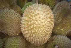 Durian - the king of fruits. Picture of durian, regarded as king of the fruits, with strong odor and formidable thorn-covered rind stock photo