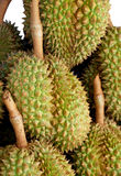 Durian. Is known as the king of fruit and popular in Southeast Asia Royalty Free Stock Image