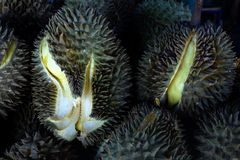 Durian, konung av tropiska frukter i Thailand och South East Asia fotografering för bildbyråer