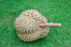 Durian konungen av frukt av South East Asia på exponeringsglas Arkivfoto