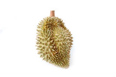 Durian of local fruit isolated. Royalty Free Stock Photo