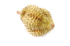 Durian of local fruit isolated. Stock Image