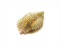 Durian of local fruit isolated. Stock Photography