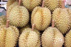 Durian of local fruits in Thailand. Stock Image