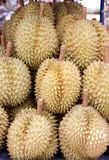 Durian of local fruits in Thailand. Stock Images