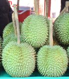 Durian - & x22;Long-tailed Golden Leaf& x22; - Seasonal fruit - Expensive. Durian - & x22;Long-tailed Golden Leaf& x22; - Seasonal fruit - Expensive, well Royalty Free Stock Photo