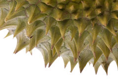Durian Macro Royalty Free Stock Photography