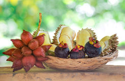Durian,mangosteen,sala fruits in the basket.background blur boke Stock Images