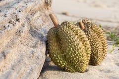 Durian mit Bauholz auf Strand Stockbilder