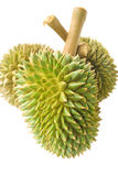 Durian. Stock Photography