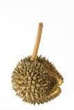 Durian non mûr sur le fond blanc Photo libre de droits