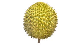 Durian Tropical fruit. Durian is one of the famous tropical fruits, native to Malaysia. Some countries in Southeast Asia grow more, with Thailand the most Stock Photography