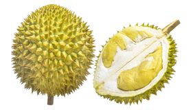 Durian Tropical fruit. Durian is one of the famous tropical fruits, native to Malaysia. Some countries in Southeast Asia grow more, with Thailand the most Royalty Free Stock Images