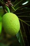 durian owoc Zdjęcia Stock