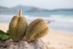 Durian på stranden Fotografering för Bildbyråer