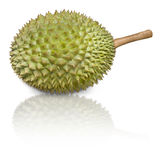 Durian, pronouns as King of Fruits. On white background Royalty Free Stock Photo