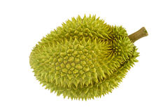 Durian ripe with green bark and spikes isolated Stock Image
