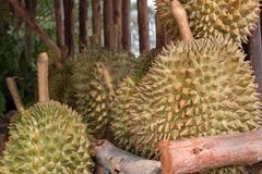 Durian, roi de fruit Photos stock