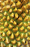 Durian spikes Stock Photography