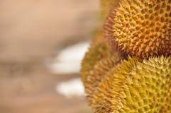 Durian in spiky shell. Java Stock Photos