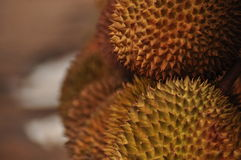 Durian in spiky shell. Java Stock Photo