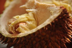 Durian in spiky shell. Java Royalty Free Stock Photo