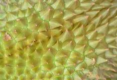 Durian tło i Zdjęcie Stock