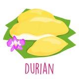 Durian Thai popular fruit white background  Stock Photography