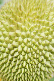Durian thorn closeup Royalty Free Stock Photos