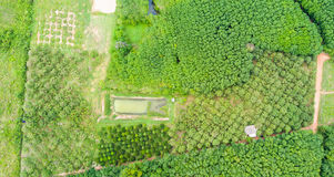 Durian trees orchard and rubber trees plantation royalty free stock photo