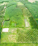 Durian trees orchard and rubber trees plantation Stock Image