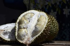 Durian Tropical Fruit cut in half wide open  on dark background. portrait. Durian Tropical Fruit Durio cut in half wide open  on dark background. portrait Royalty Free Stock Photography