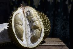 Durian Tropical Fruit cut in half wide open  on dark background. portrait. Durian Tropical Fruit Durio cut in half wide open  on dark background. portrait Stock Images