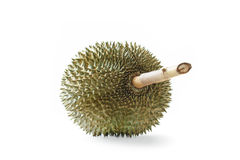 Durian tropical fruit on white background Royalty Free Stock Image