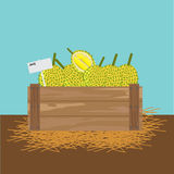 Durian in a wooden crate. Vector illustration Stock Image