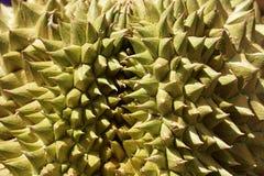 Durian, zakończenie Up Fotografia Stock
