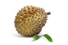 Durianfrüchte und Durian treiben auf weißem Hintergrund, Asien-Früchte Blätter stockfoto