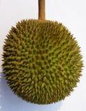 Durianfrucht Lizenzfreies Stockfoto