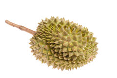Durianfrucht lizenzfreie stockbilder