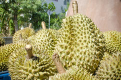 Durianfrukt av sommar Royaltyfria Foton