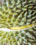 Durianfrukten arkivfoto