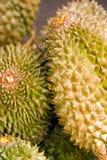 durianfrukter Fotografering för Bildbyråer