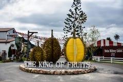 Duriankonung av frukter Arkivbild