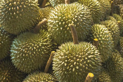 Durians Stock Images