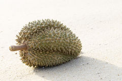 Durians auf dem Strand Lizenzfreie Stockfotografie