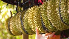 Durians en el mercado almacen de video